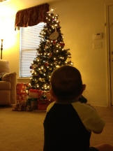 Braxton staring at the tree