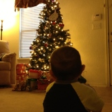 Braxton staring at the tree