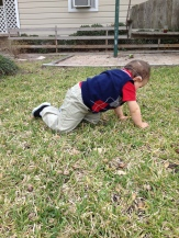 Braxton crawling around in the grass