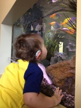 Getting a closer look at the fish